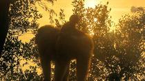 Gibraltar Macaque Experience, Gibraltar, Nature & Wildlife