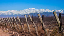 Lujan Wine Region Tour with Lunch from Mendoza, Mendoza, Wine Tasting & Winery Tours