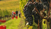 Brunello and Nobile Wine Lovers' Tour: Montalcino and Montepulciano, Florence, Day Trips
