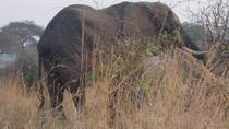 1-Day Akagera National Park safari, Kigali, Day Trips