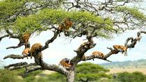 1 Day Lake Manyara safari, Arusha, Day Trips