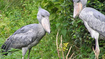 1 Day Mabamba swamp bird watching trip, Kampala, Nature & Wildlife