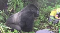 1 Day Rwanda gorilla trekking safari, Kigali, Day Trips