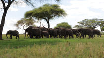 1 Day Tarangire safari, Arusha, Day Trips