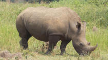 1 Day ziwa Rhino tracking trip, Kampala, Day Trips