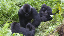 3 Day Congo gorilla trekking safari, Congo, Multi-day Tours