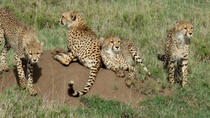 4-Day Kidepo Wild Life Safari, Kampala, Multi-day Tours