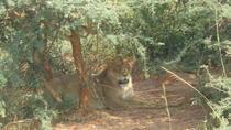 4-Day Ngorongoro Serengeti Tarangire Safari, Arusha, Cultural Tours
