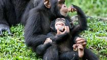 5-Day Queen Elizabeth & Kibale Forest Chimp trek, Kampala, Hiking & Camping