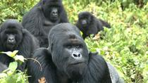 5 Day Rwanda gorilla and Lake Kivu Safari, Kigali, Multi-day Tours