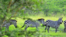 Lake Mburo National Park Guided Day Tour from Kampala, Kampala, null