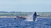 Whale Watch Lahaina Raft, Maui, Family Friendly Tours & Activities
