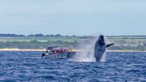 Whale Watch Lahaina Raft, Maui, null