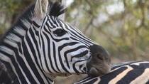 2-Day Chalet Kruger Park Safari from Johannesburg, Johannesburg, Multi-day Tours