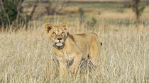 3-Day Chalet Kruger Park Safari from Johannesburg, Johannesburg, Multi-day Tours