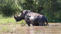 3-Day Tented Kruger Park Safari from Johannesburg, Johannesburg, Multi-day Tours
