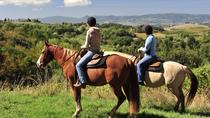 Horseback Outride, Johannesburg, Horseback Riding