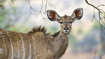Join a Group Pilanesberg Game Drive, North West, 4WD, ATV & Off-Road Tours