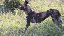 Kruger National Park Early Morning Game Drive, Kruger National Park, Attraction Tickets