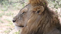 Kruger Park Full Day Game Drive, Kruger National Park, Day Trips