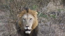 Pilanesberg Walking Safari from Johannesburg, Johannesburg, Nature & Wildlife