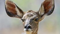 Private Tour: 3-Day Chalet Pilanesberg Safari from Johannesburg, Johannesburg, Multi-day Tours