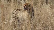 Private Tour: 3-Day Tented Pilanesberg Safari from Johannesburg, Johannesburg, Multi-day Tours