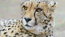 Private Tour - 4-Day Tented Kruger Park Safari from Johannesburg, Johannesburg, Private Sightseeing ...