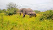 Private Tour: 4-Day Tented Pilanesberg Safari from Johannesburg, Johannesburg, Multi-day Tours