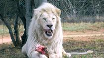 Private Tour: Lion Park Half Day Tour, Johannesburg, Day Trips