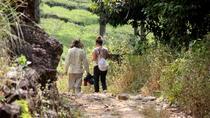 Half day trekking at Letchmi Hills in Munnar, Munnar, Hiking & Camping