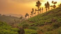 Kerala in 05 Days, Kochi, Multi-day Cruises