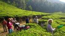 Trekking Tour in Munnar, Munnar, Cultural Tours