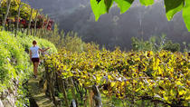 Madeira Wine Tour-Vineyards and Cellars, Madeira, Wine Tasting & Winery Tours