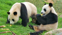 Private Chengdu Impression Day Tour including Chengdu Panda Base, Chengdu