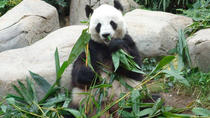 Private Day Tour: Chengdu Panda Breeding Base and Sanxingdui Museum, Chengdu, Private Day Trips