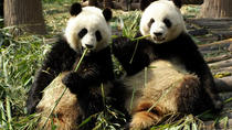 Private Day Tour: Dujiangyan Panda Base Volunteering from Chengdu , Chengdu, Eco Tours
