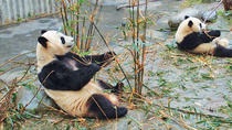 Private Day Tour of Chengdu Giant Panda and Chinese Kung Fu Learning , Chengdu, Private...