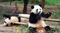 Private Day Tour with Panda Holding at Dujiangyan Panda Base and Wuhou Temple, Chengdu, Private ...