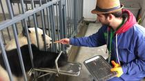 Wolong Panda Base Volunteering Program with Photo-taking with Panda Option, Chengdu, Nature & ...