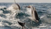 Private 2-Hour Dolphin Tour in Kalpitiya, Sri Lanka, Day Cruises
