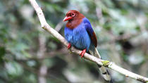 Private Day Tour: Sinharaja Rainforest Bird Hike Tour, Sri Lanka, Hiking & Camping