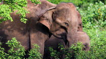 Private Day Tour: Udawalawe National Park Safari From Tangalle, Galle, Safaris