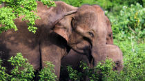 Private Day Tour: Udawalawe National Park Safri From Bentota, Bentota, Full-day Tours