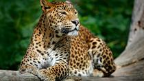 Private Day Tour: Yala National Park Safari From Udawalawe, Galle, Attraction Tickets