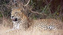 Private Guided Wilpattu National Park Safari from Sigiriya, Sigiriya, Attraction Tickets