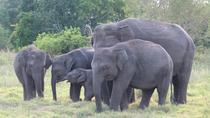 Private Half Day Safari: Kaudulla National Park from Sigiriya, Sigiriya, Attraction Tickets