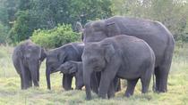 Private Half Day Safari: Minneriya National Park from Sigiriya, Sigiriya, Attraction Tickets