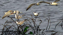 Private Muthurajawela Sanctuary Bird Watching Tour from Colombo, Colombo, Nature & Wildlife