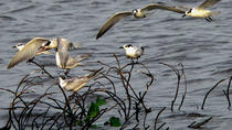 Private Muthurajawela Sanctuary Bird Watching Tour from Colombo or Negombo, Colombo, Nature & ...